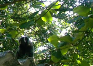 Mico no Telhado perto das Árvores